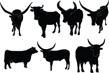cattle collection Stock Vector - 5097915