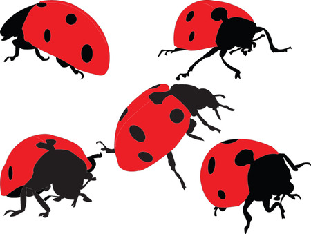 ladybird silhouette collection - vector Vector