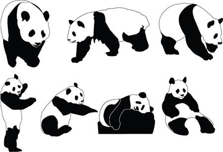 oso panda: colecci�n panda - vector