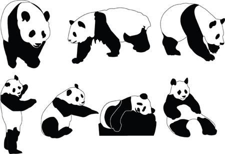 panda collection - vector Vector