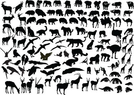 animal of africa - vector Stock Vector - 5118770