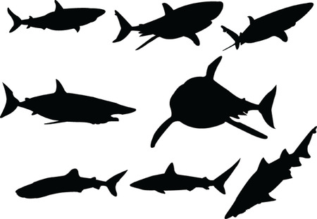 sharks collection - vector Stock Vector - 5118755
