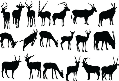 antelopes collection - vector Illustration