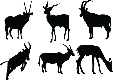 watchful: antelopes collection 1 - vector Illustration