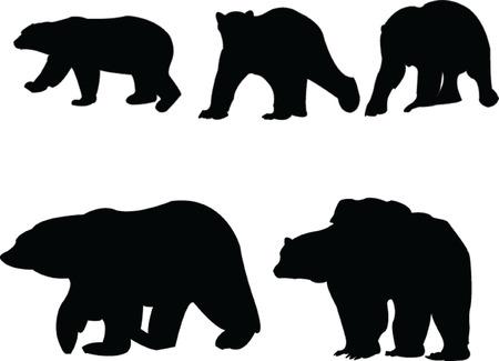 wild bears: sea bears collection - vector Illustration