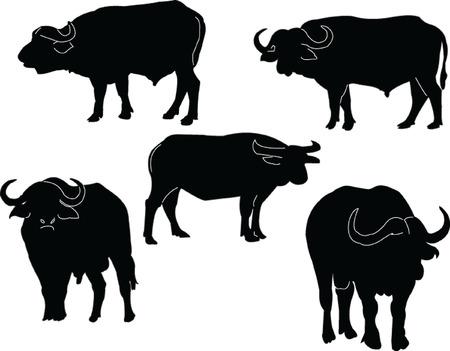 buffalo collection Vector
