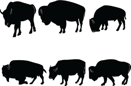 buffalo-bisons collection Vector