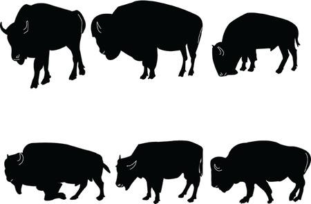 norte: Buffalo-bisontes collection - vector