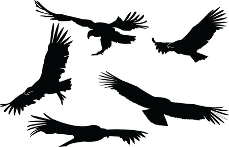 condors collection Vector