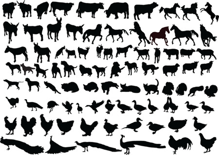 farm animal collection - vector Vector