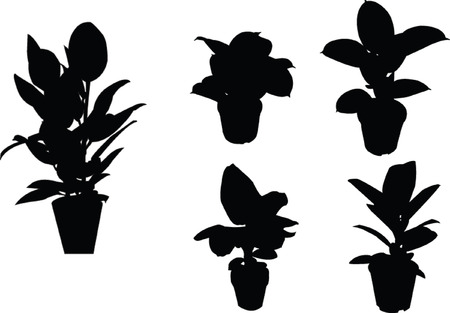 ficus silhouette collection - vector Stock Vector - 5146383
