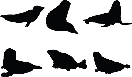 seal collection - vector Vector