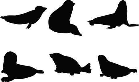 seal collection - vector Vector