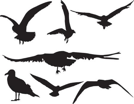 wingspan: sea gull collection - vector