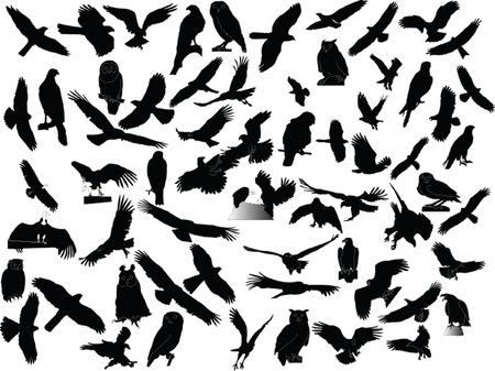 hawks collection - vector Stock Vector - 5146391