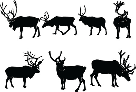 reindeers collection - vector Stock Vector - 5146402