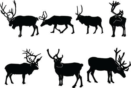 reindeers collection - vector