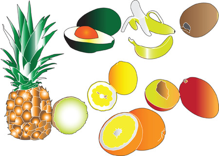 citrus fruits collection - vector Vector