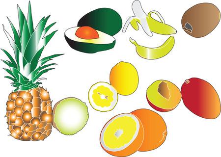 citrus fruits collection - vector Vector