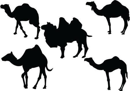 camels collection - vector Stock Vector - 5146425