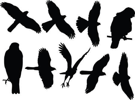 soar: recogida de gavilanes - vector Vectores