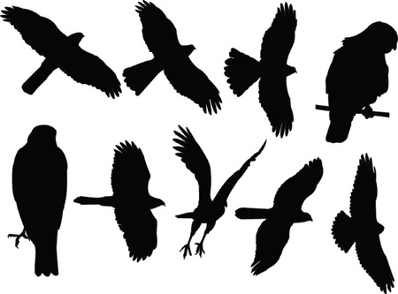 sparrowhawks collection - vector Vector