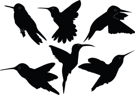 humming bird collection - vector Stock Vector - 5146409