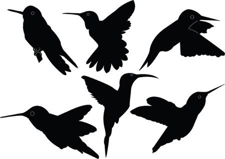 bird watching: humming bird collection - vector