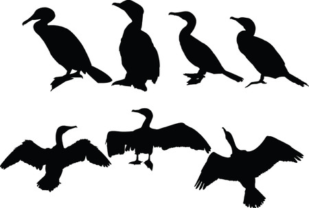 cormorants collection Stock Vector - 5146461