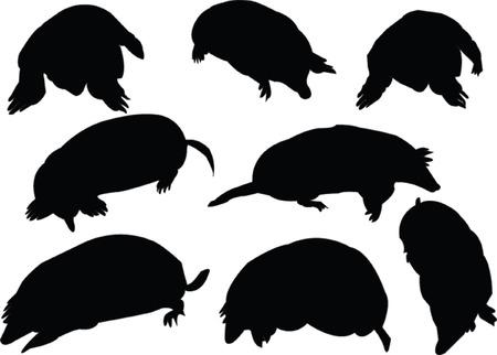 moles collection Vector
