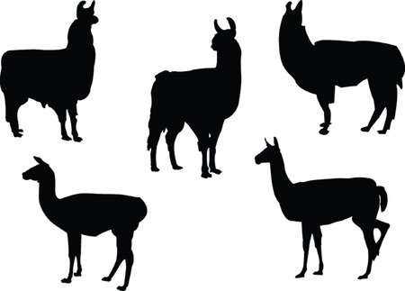 lamas collection - vector