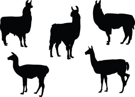 Lamas Sammlung - Vektor