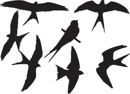swallows silhouette collection - vector