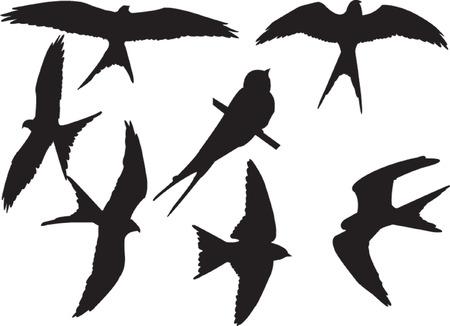 swallows silhouette collection - vector