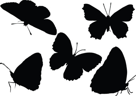 butterfly collection - vector Vector