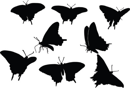 butterfly silhouette collection - vector