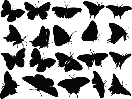 butterfly silhouette: butterfly silhouette collection - vector