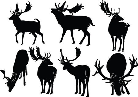 deer collection - vector Vector