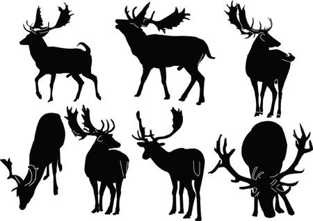 deer collection - vector Vector