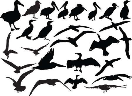 sea birds collection Vector
