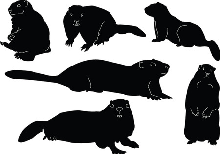 marmot: marmot collection - vector