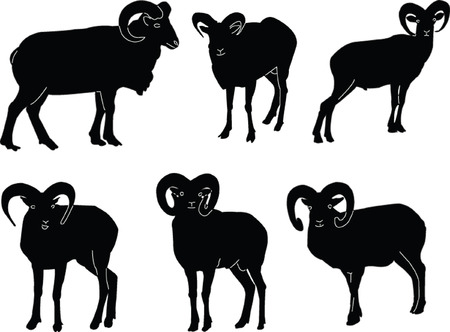 bighorn: ovis musimon collection - vector Illustration