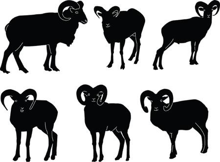 goat capricorn: ovis musimon collection - vector Illustration