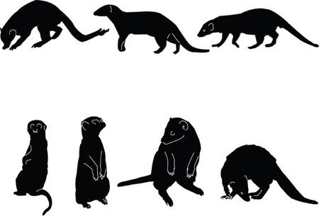 lookout: meerkats collectin - vector Illustration