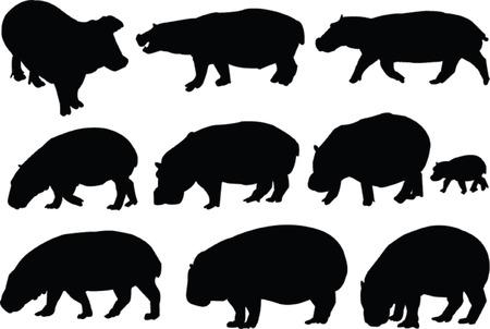 hippopotamus collection - vector Stock Vector - 5248856