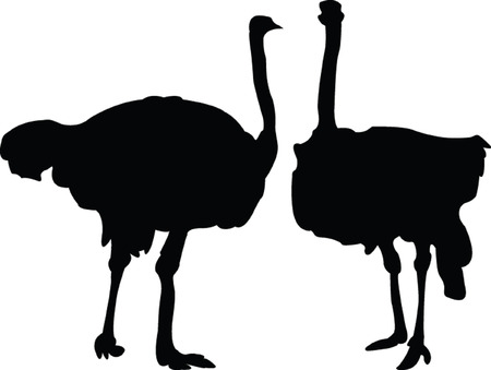 emu: ostrich - vector Illustration