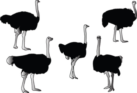 ostrich collection - vector Illustration
