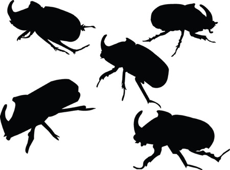 beetle-rhinoceros collection - vector Vector