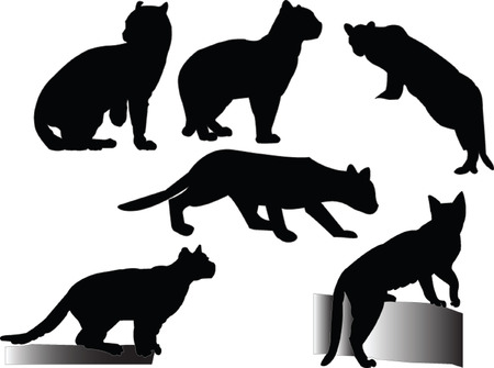 ocelots collection - vector Vector