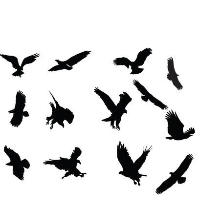 águilas silueta collection - vector